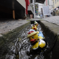 Rubber ducks escape in Nuernberg